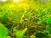 uma planta na tarde imagem de stock