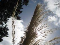 Uma planta nativa de Nova Zelândia Imagem de Stock Royalty Free