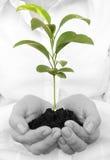 Uma planta nova nova que cresce nas mãos Fotografia de Stock Royalty Free