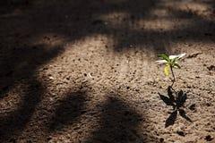 Uma planta pequena Imagem de Stock Royalty Free