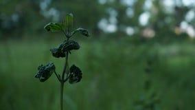 Uma planta pequena Imagens de Stock