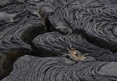 Uma planta pequena brota em Lava Field fotos de stock