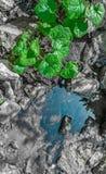 Uma planta pequena perto da água foto de stock royalty free