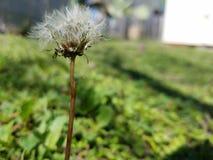 Uma planta só no quintal Imagem de Stock