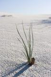 Uma planta solitária no deserto fotografia de stock royalty free