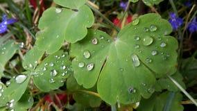 Uma planta verde Fotografia de Stock