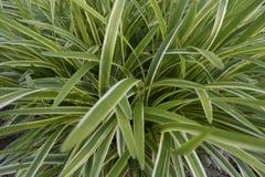 Uma planta verde Imagem de Stock Royalty Free