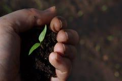 Uma planta verde com um punhado da terra à disposição, espaço da cópia para seu texto foto de stock