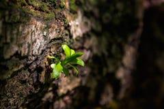 Uma planta verde emergente Foto de Stock Royalty Free