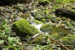 Uma poça na floresta Imagem de Stock Royalty Free