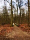 Uma ponte branca no meio da floresta Foto de Stock Royalty Free