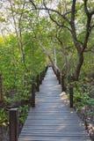 Uma ponte de madeira na tanga dourada do dente de Thung do campo dos manguezais Foto de Stock Royalty Free