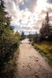 Uma ponte de vista de madeira que conduz através da floresta fotografia de stock