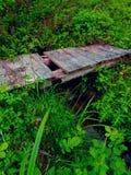 Uma ponte musgoso de madeira que cruza uma angra no meio da floresta Fotos de Stock