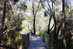 Uma ponte na floresta Imagens de Stock Royalty Free