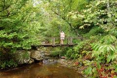 Uma ponte na floresta imagem de stock royalty free