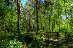 Uma ponte na floresta Imagens de Stock
