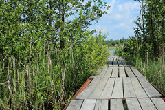 Uma ponte pequena, cais de madeira Foto de Stock Royalty Free