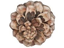 Uma porca do guarda-chuva: uma porca de pinho Imagem de Stock Royalty Free