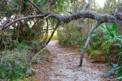 Uma porta formou por um tronco de árvore caído fotografia de stock