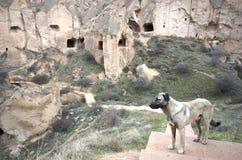 Uma posição do cão na frente das chaminés feericamente, Cappadocia/Turquia fotografia de stock
