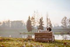 Uma posição feliz do pug do cachorrinho em uma caixa de madeira imagens de stock