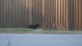 Uma posição pequena do cão preto na cerca do ferro, e então escaladas filme