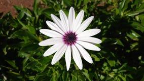 Uma pouca flor fotografia de stock