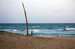 Uma praia da árvore fotografia de stock royalty free