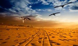 Uma praia no ouro Imagem de Stock