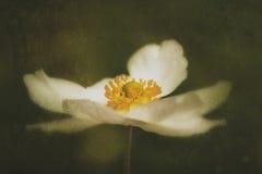 Uma profundidade rasa da flor do campo Fotos de Stock Royalty Free