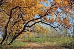 Uma queda das folhas em um bosque do carvalho foto de stock royalty free