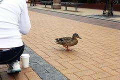 Uma rapariga e um pássaro esperto na zona do pedestre Foto de Stock