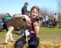 Uma rapariga que afaga um cordeiro recém-nascido imagens de stock