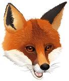 Uma raposa Imagens de Stock Royalty Free