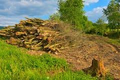 Uma raspadora da madeira Imagens de Stock Royalty Free