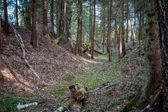 Uma ravina pequena na floresta imagem de stock