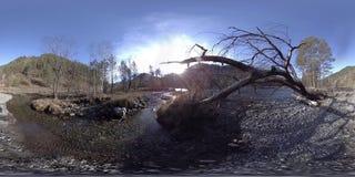 Uma realidade virtual de 360 VR do montanhas, floresta do pinho e rio selvagens flui Raios do parque nacional, do prado e do sol vídeos de arquivo