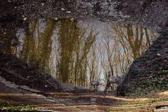 Uma reflexão de espelho Imagem de Stock