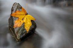Uma rocha constante ajuda um único suporte da folha da queda contra o remoinho fotografia de stock royalty free