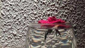 Uma rosa Fotografia de Stock
