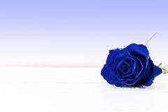 Uma rosa azul Foto de Stock Royalty Free