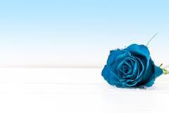 Uma rosa azul Imagem de Stock