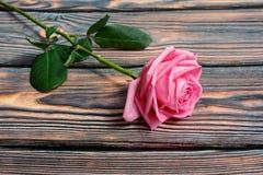 Uma Rosa cor-de-rosa Imagem de Stock Royalty Free