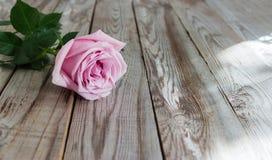 Uma rosa da cor pastel no fundo de madeira Foto de Stock
