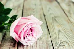 Uma rosa da cor pastel no fundo de madeira Fotos de Stock Royalty Free
