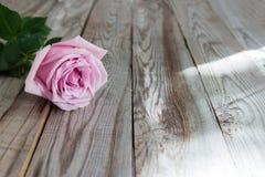 Uma rosa da cor pastel no fundo de madeira Imagens de Stock