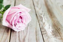 Uma rosa da cor pastel no fundo de madeira Foto de Stock Royalty Free