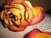 Uma rosa e um livro fotos de stock