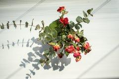 Uma rosa elegante de seco aumentou foto de stock royalty free
